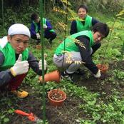 熊走町で山椒の苗を植栽